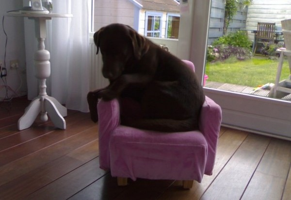 big dog small chair 3