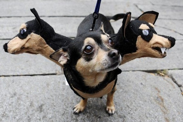 3-Headed-Dog