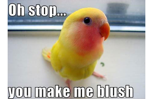 funny-bird-blushing-yellow2